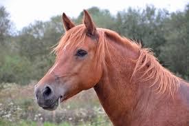 adivinhas-folcloricas-cavalo
