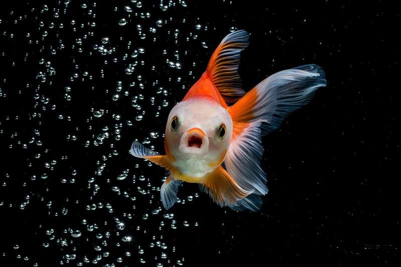 adivinhas-folcloricas-peixe