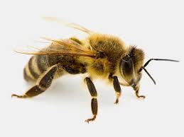 adivinhas-infantil-respostas-abelha