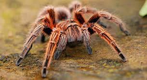 adivinhas-infantil-respostas-aranha