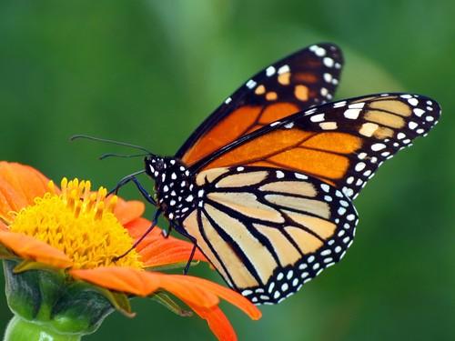 adivinhas-infantil-respostas-borboleta