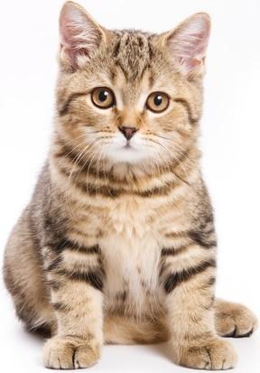 adivinhas-infantil-respostas-gato