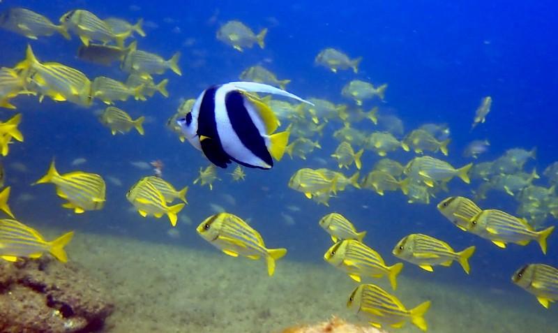 adivinhas-infantil-respostas-peixe