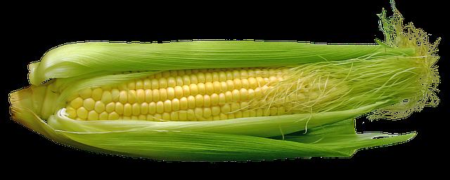 adivinhas o que e o que e milho