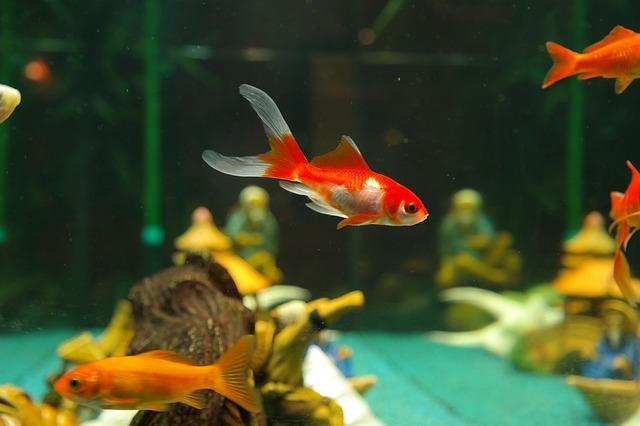 brincadeiras de roda peixinho