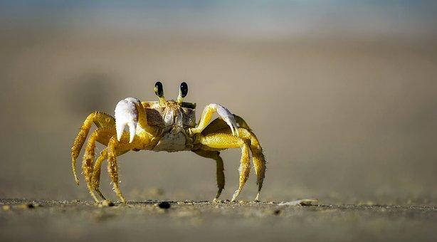 cantigas-roda-caranguejo