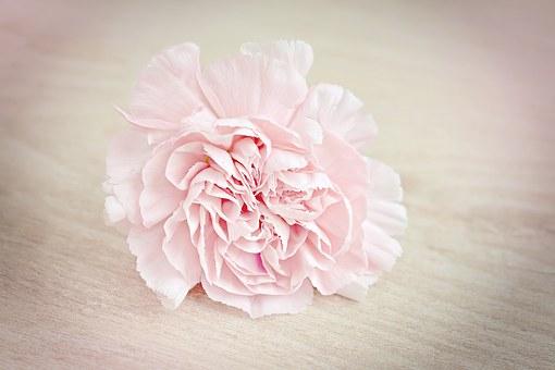 cantigas-roda-cravo-rosa
