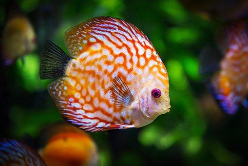 cantigas-roda-peixe-vivo