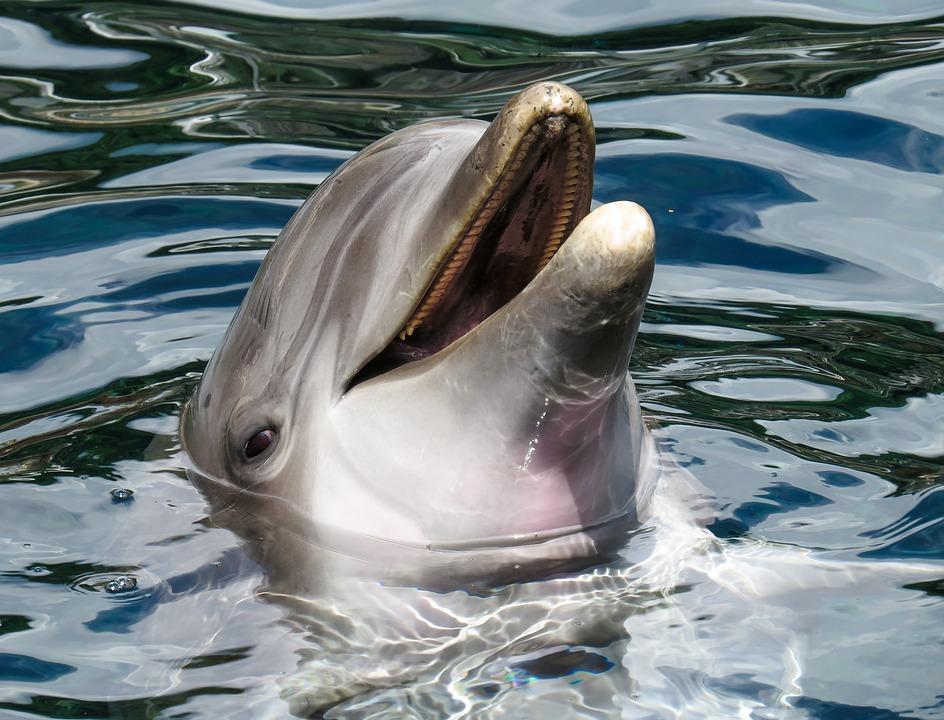 contos-fadas-macaco-golfinho