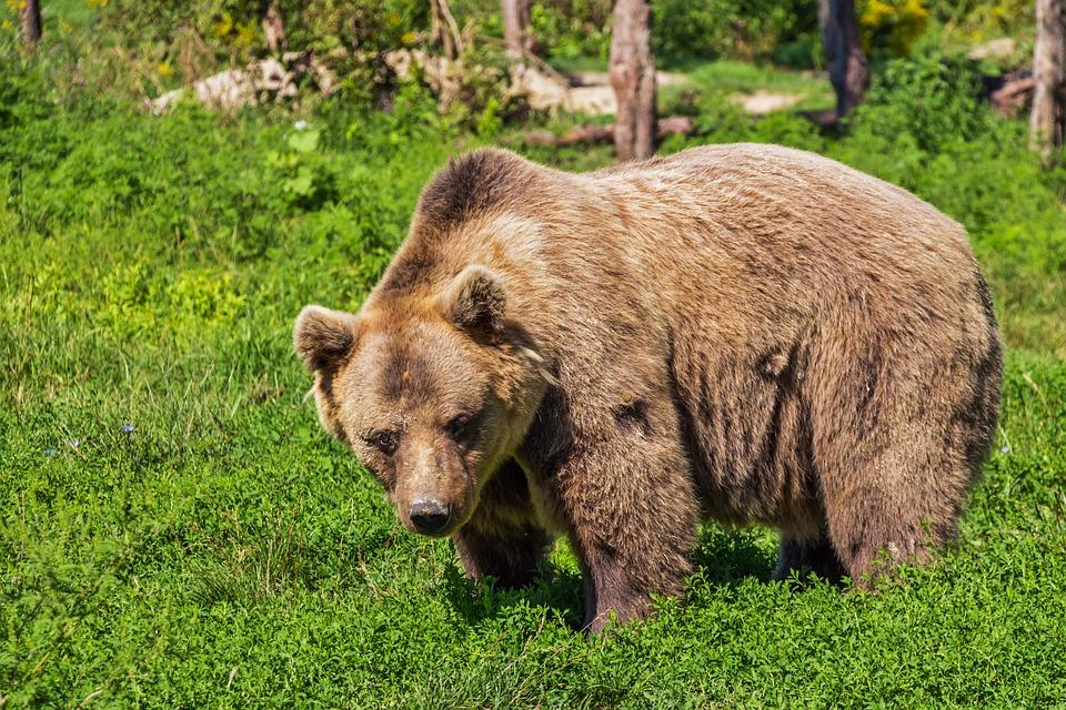 contos-infantis-amigos-urso