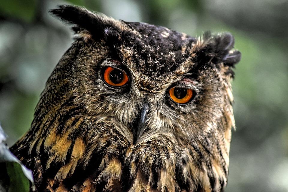 fabulas-infantis-aguia-coruja