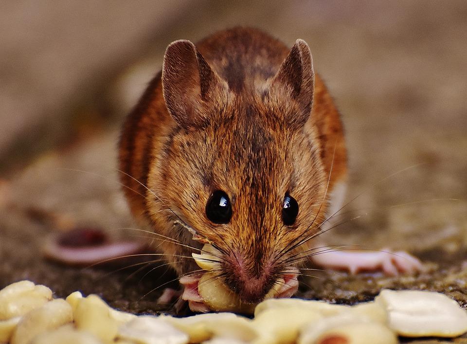 fabulas-infantis-ratinho-cidade