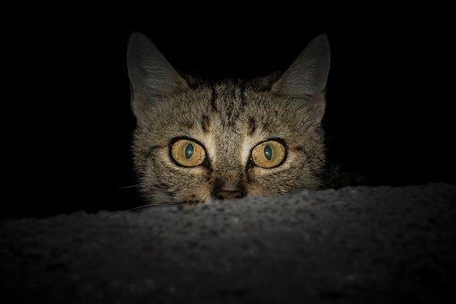gato-mia-brincadeira-escuro