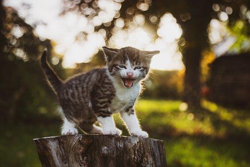 gato-mia-brincadeira-passo-5