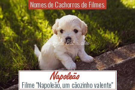 Nomes de Cachorros de Filmes - Napoleão