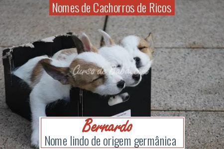 Nomes de Cachorros de Ricos - Bernardo