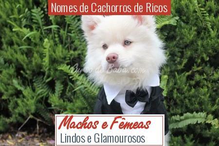 Nomes de Cachorros de Ricos - Machos e Fêmeas