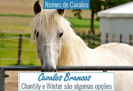 Nomes de Cavalos - Cavalos Brancos