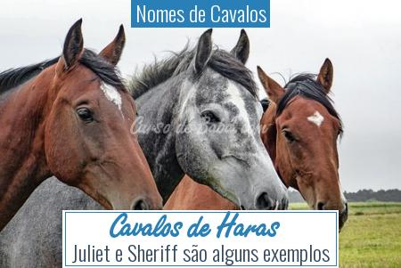 Nomes de Cavalos - Cavalos de Haras