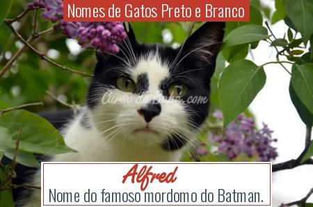 Nomes de Gatos Preto e Branco - Alfred