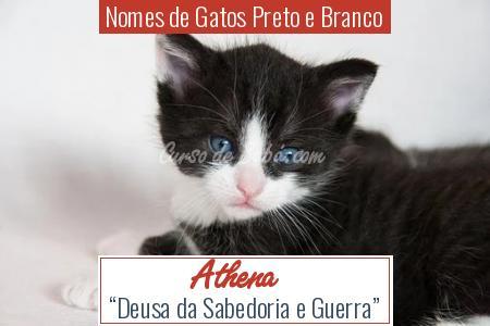 Nomes de Gatos Preto e Branco - Athena