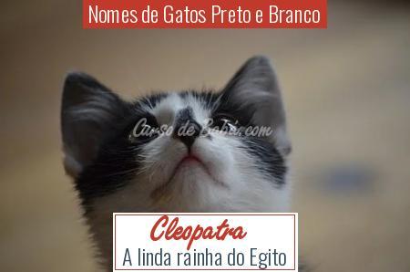Nomes de Gatos Preto e Branco - Cleopatra