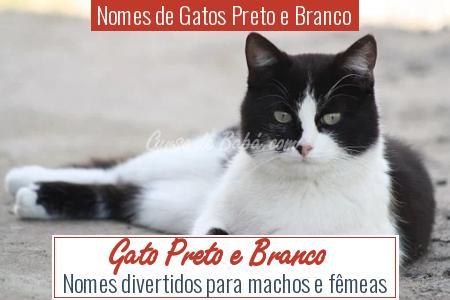Nomes de Gatos Preto e Branco - Gato Preto e Branco