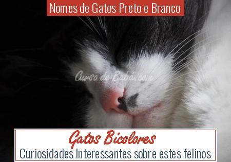 Nomes de Gatos Preto e Branco - Gatos Bicolores