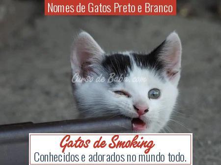 Nomes de Gatos Preto e Branco - Gatos de Smoking