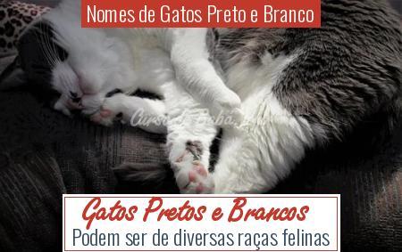 Nomes de Gatos Preto e Branco - Gatos Pretos e Brancos