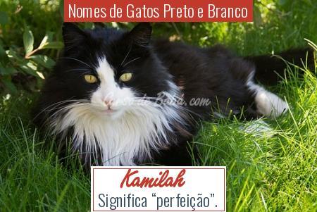 Nomes de Gatos Preto e Branco - Kamilah
