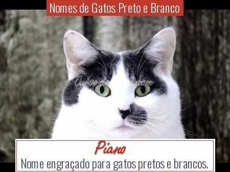 Nomes de Gatos Preto e Branco - Piano