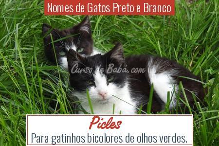 Nomes de Gatos Preto e Branco - Picles