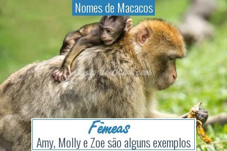 Nomes de Macacos - Fêmeas