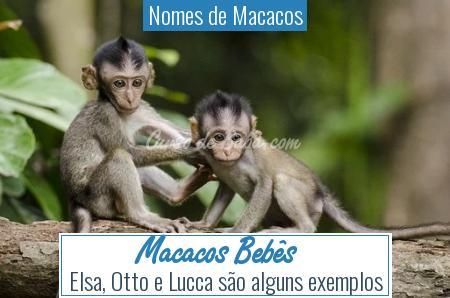 Nomes de Macacos - Macacos Bebês