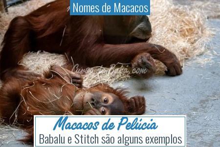 Nomes de Macacos - Macacos de Pelúcia