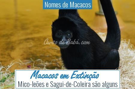 Nomes de Macacos - Macacos em Extinção
