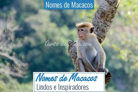 Nomes de Macacos - Nomes de Macacos