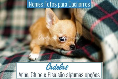 Nomes Fofos para Cachorros - Cadelas