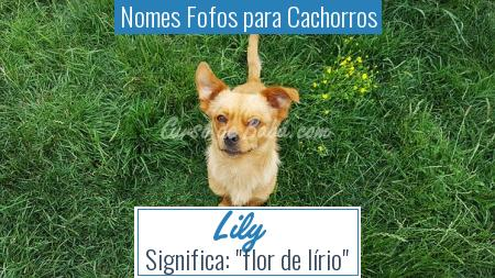 Nomes Fofos para Cachorros - Lily