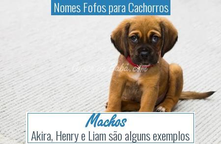 Nomes Fofos para Cachorros - Machos