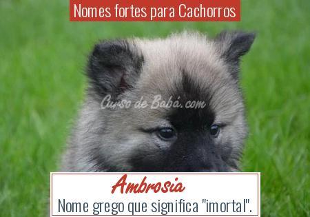 Nomes fortes para Cachorros - Ambrosia