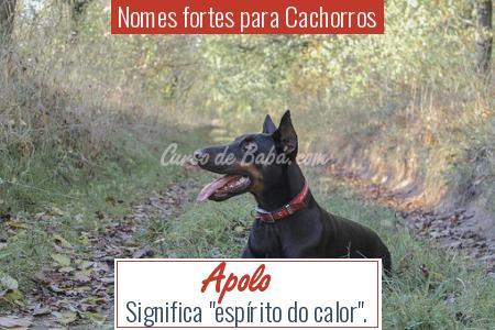 Nomes fortes para Cachorros - Apolo