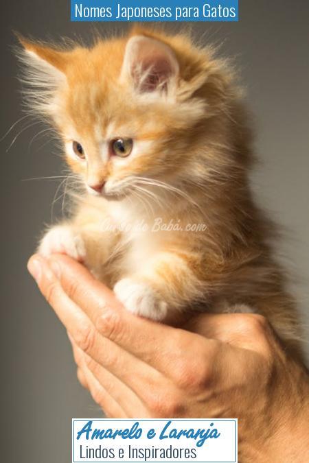 Nomes Japoneses para Gatos - Amarelo e Laranja