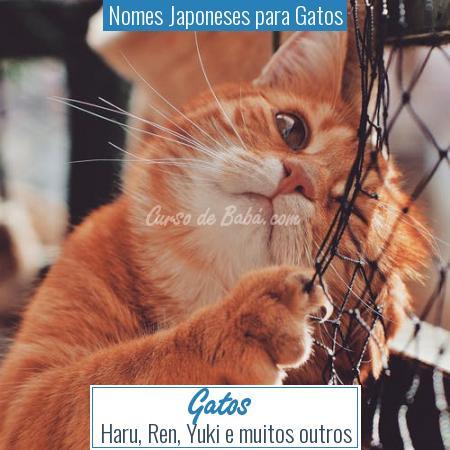 Nomes Japoneses para Gatos - Gatos