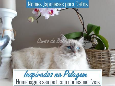 Nomes Japoneses para Gatos - Inspirados na Pelagem