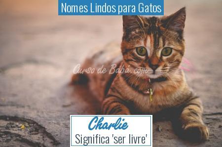 Nomes Lindos para Gatos - Charlie