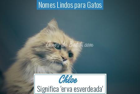 Nomes Lindos para Gatos - Chloe