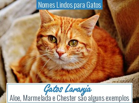 Nomes Lindos para Gatos - Gatos Laranja