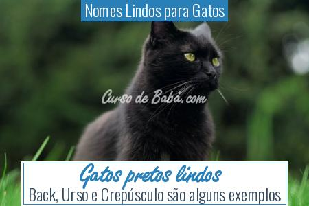 Nomes Lindos para Gatos - Gatos pretos lindos